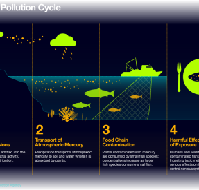 OceanHealthIndex-OHI_CHEMICAL_POLLUTION_CYCLE
